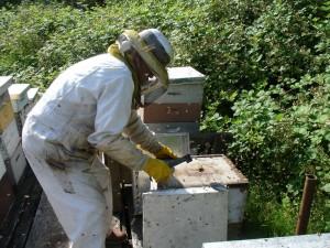 apicoltorec