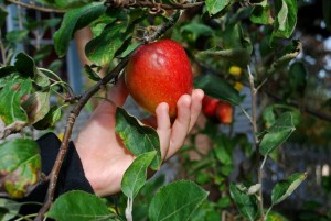 cogli-mela