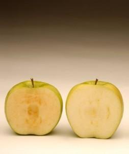mele-OGM