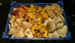 funghi-raccolti-freschi