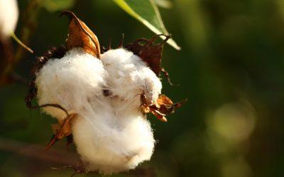 Cotone naturale o cotone industriale?