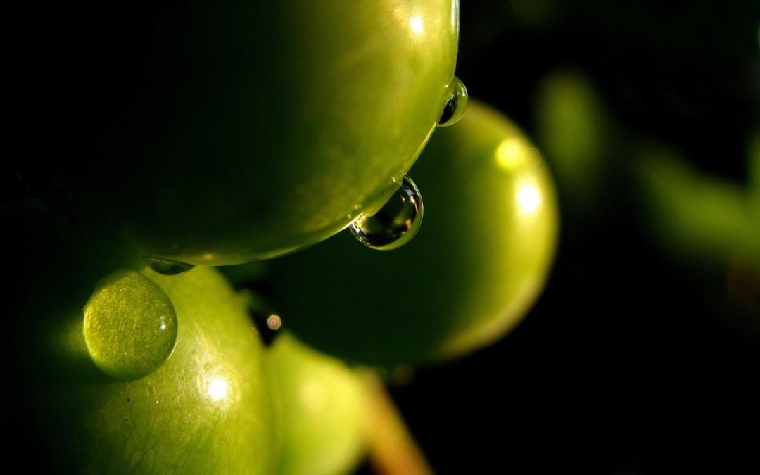 Olio extra vergine d'oliva e non solo…