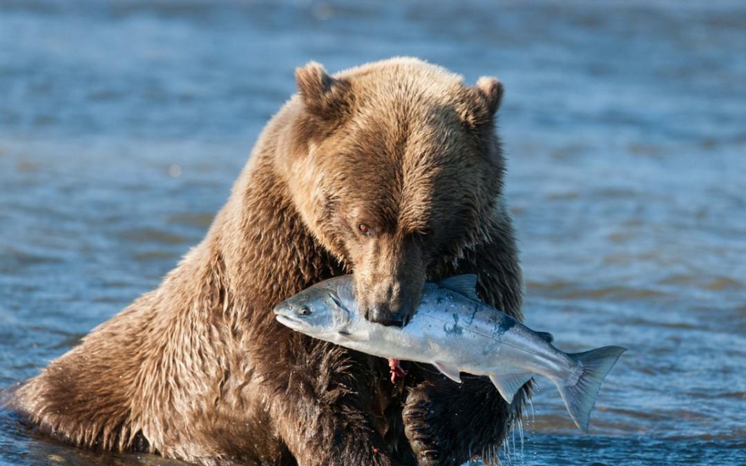 Il pesce fresco non è sempre facile da trovare…