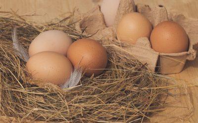 Le uova, umili ma nobili